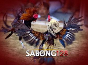 Agen Sabung Ayam S128