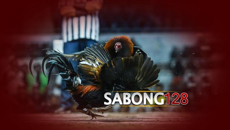 Pasang Taruhan Sabung Ayam S128