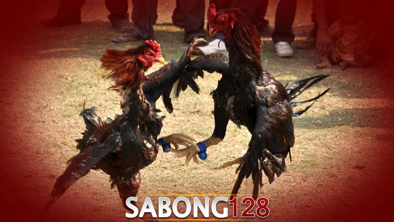 Sabong128
