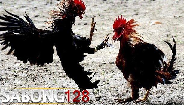 Ayam Saigon Pembasmi