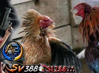 Sabung Ayam Agen Terbaik