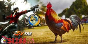 Situs Adu Ayam S1288